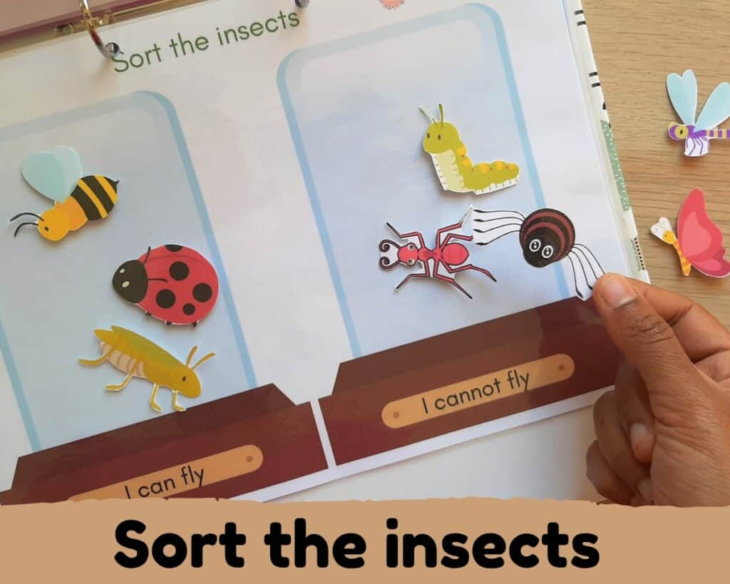 Sort the insects by characteristically