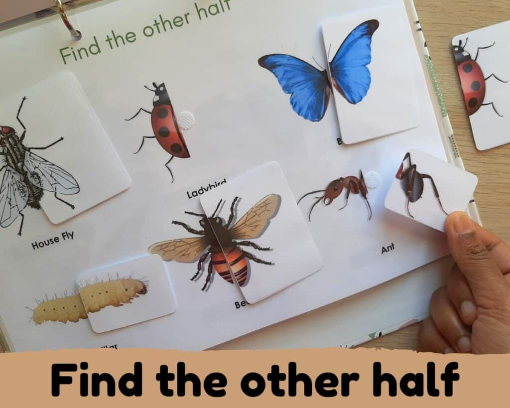 find the other half of insects