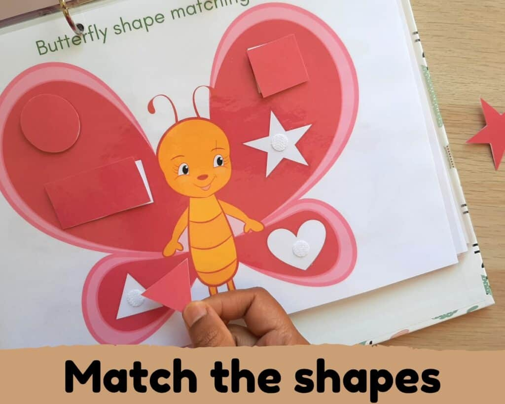 shape matching butterfly wing activity