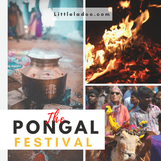 The Pongal festival