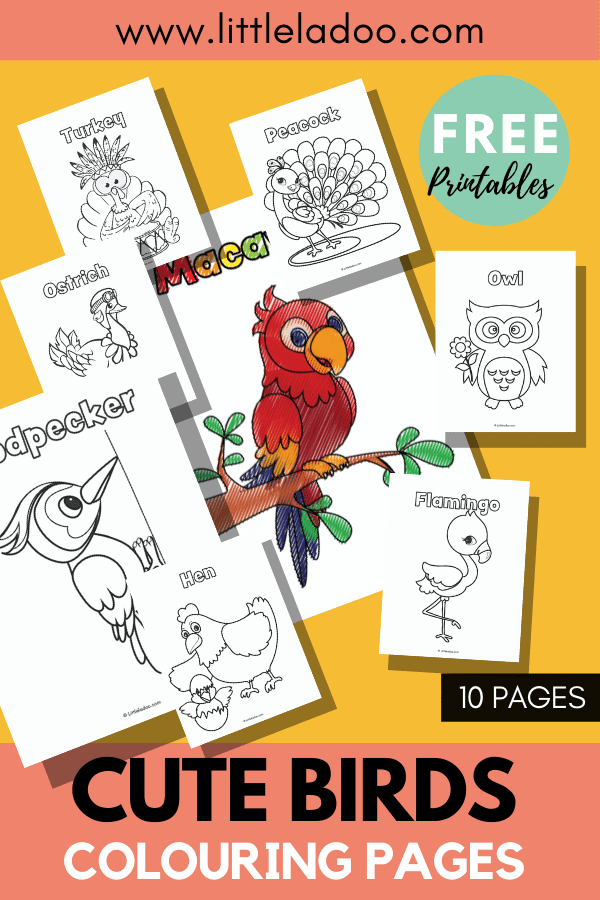 birds colouring pages macaw, woodpecker, peacock, flamingo and more